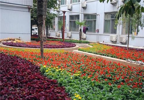 徐州医学院教学医院体检中心绿化环境