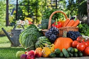 RNI与膳食均衡
